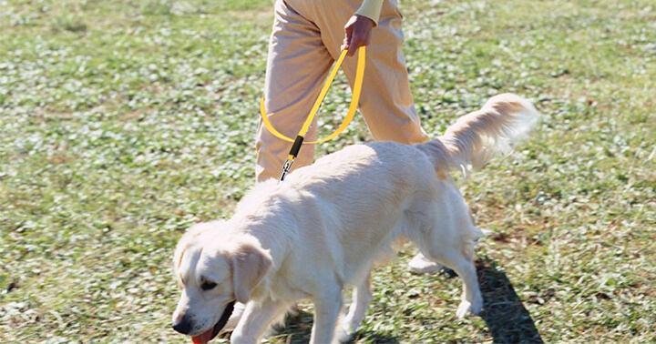 Top 10 Best Dog Leashes For Walking